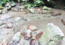 自由研究に!酒匂川の自然を調べよう!
