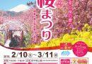 松田町『第20回まつだ桜まつり』明日より開催!