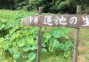 2018 7月開花状況「中井蓮池の里」