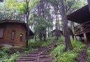 夏のキャンプも足柄で!「神奈川県立足柄ふれあいの村」で自然体験!