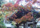 2018年紅葉情報 大雄山最乗寺 徐々に色づき始めています。