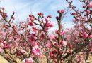 設置の協力をいただいている「小田原フラワーガーデン」2019年渓流の梅園「梅まつり」