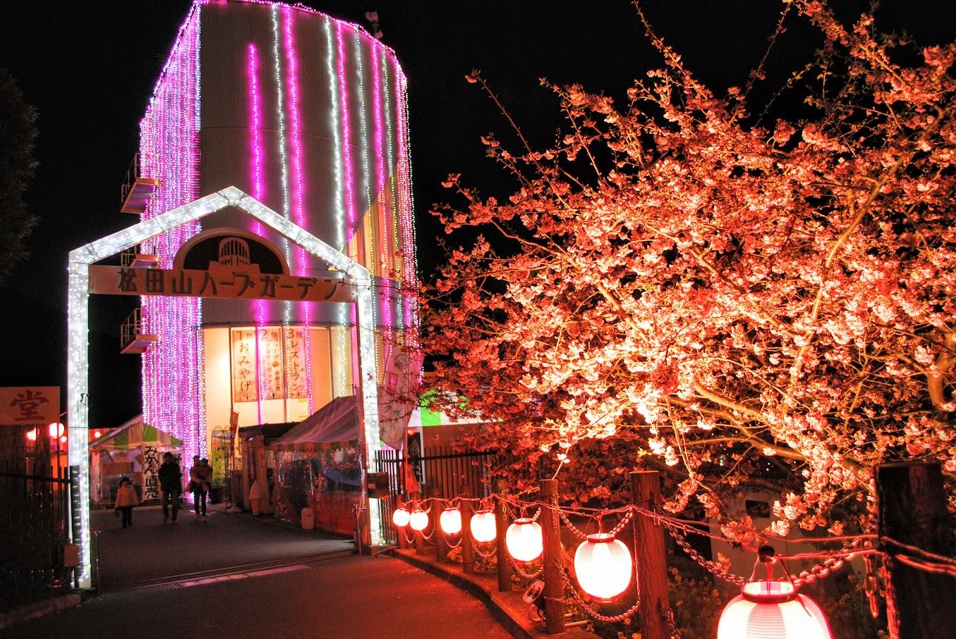 夜桜と絶景のコラボレーションを楽しもう!『まつだ桜まつり』のライトアップ。2016年2月19日より開始です!