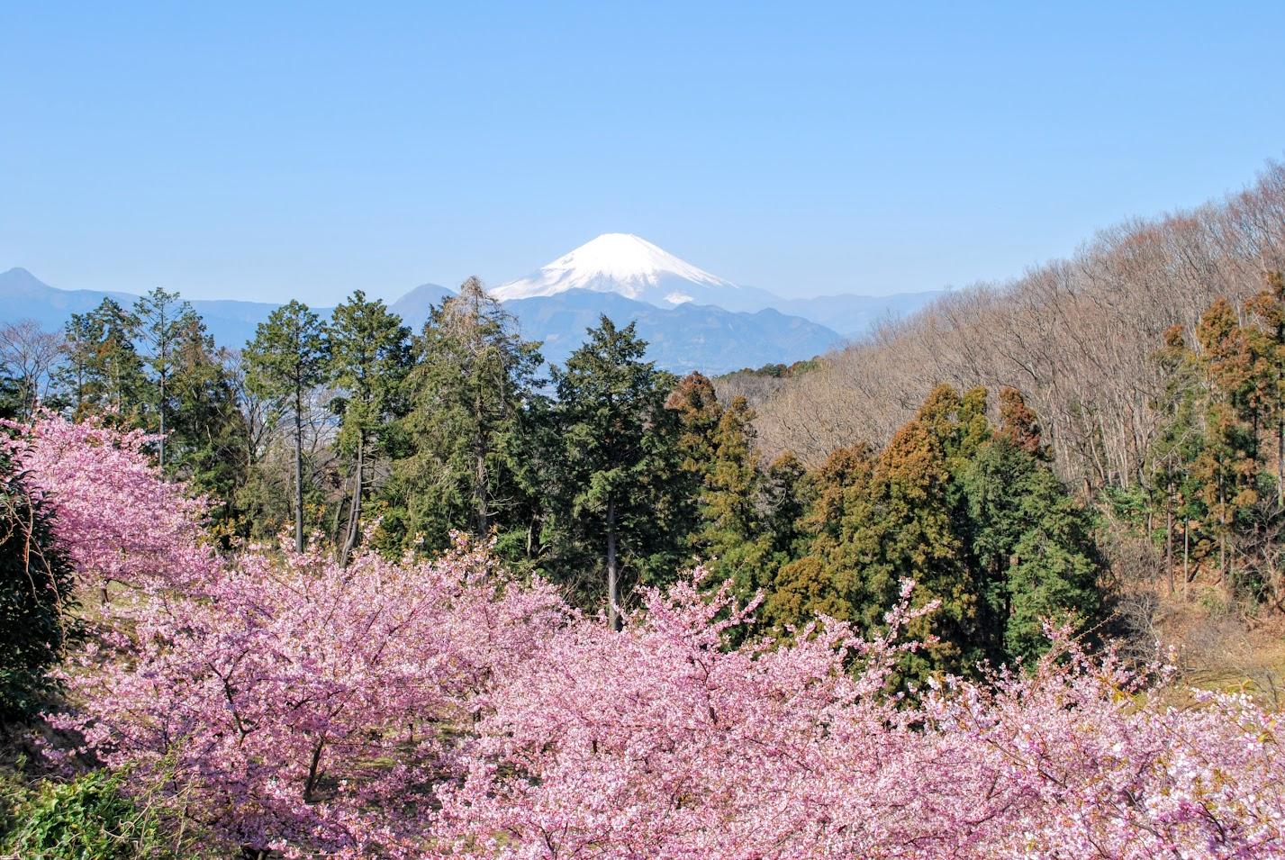 早咲きの桜とひょうたん雛を愉しめるのは今週末まで!おおいゆめの里へ行ってきました!!
