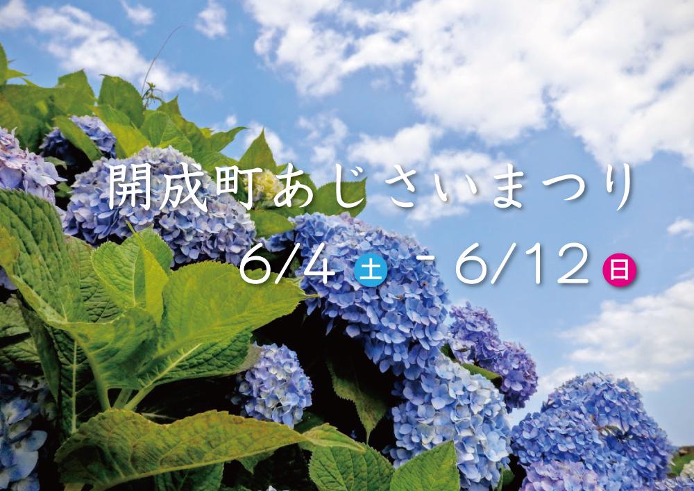 『開成町あじさいまつり』は6月4日(土)から開催。つまり明日から!!
