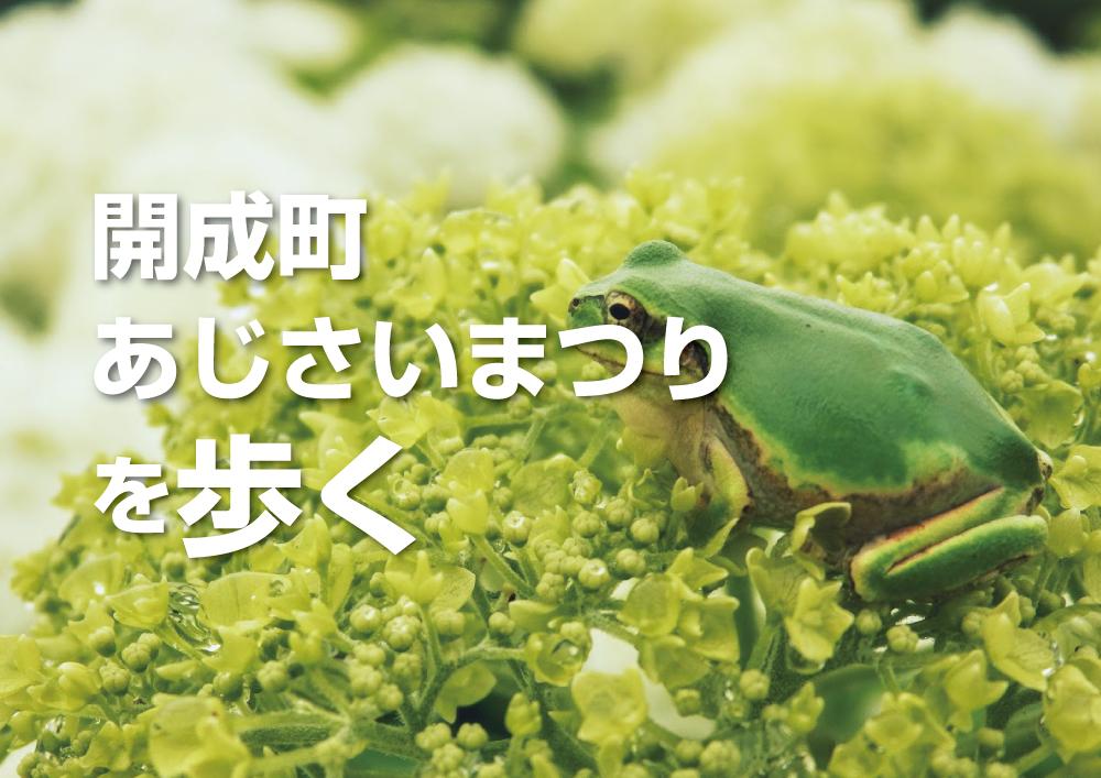 アナタは花より団子!?それとも…。『開成町あじさいまつり』を歩く!買う!そして食べる…!