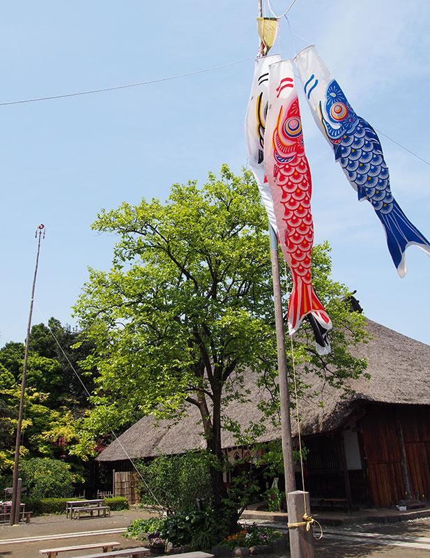 2017年 あしがり郷瀬戸屋敷「端午の節句」五月晴れの青空に茅葺屋根を泳ぐ鯉のぼり