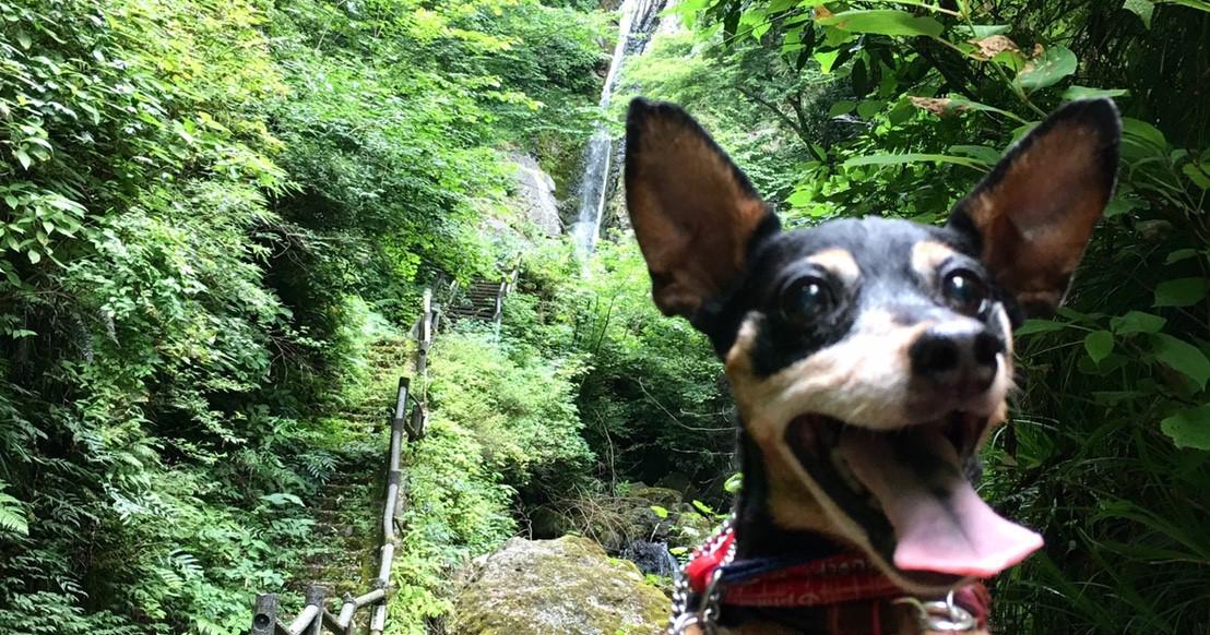2017年 マイナスイオンが気持ち良い『洒水の滝祭り』