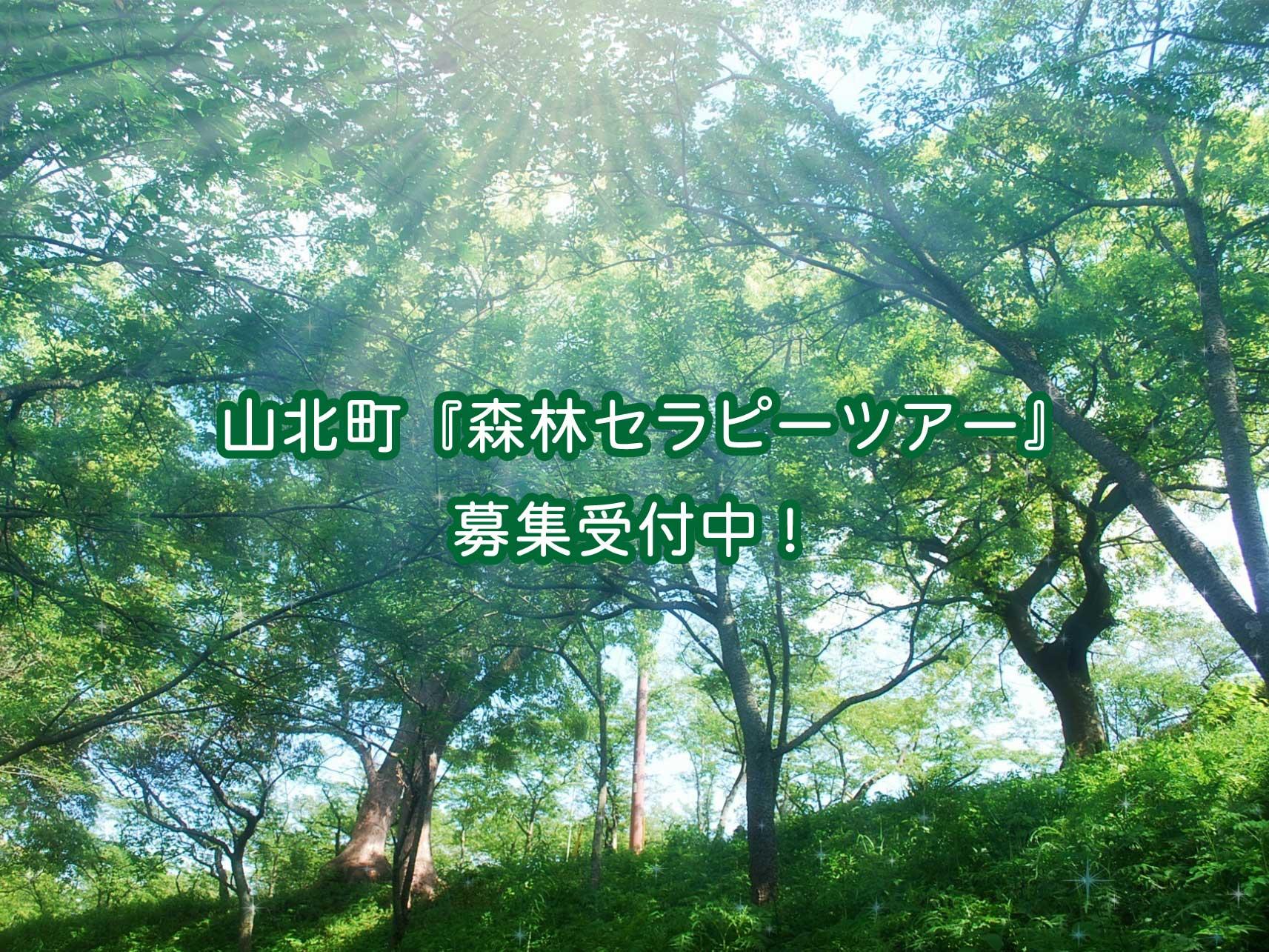 静かな森を歩いて、心をリラックスさせよう!山北町『森林セラピー体験ツアー』参加者募集中!