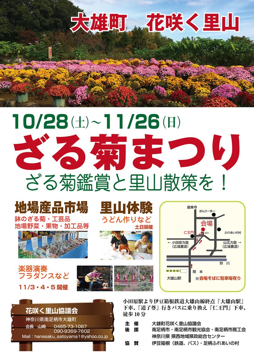 2017年10月28日(土)から『大雄町花咲く里山 ざる菊祭り』が開催されます!