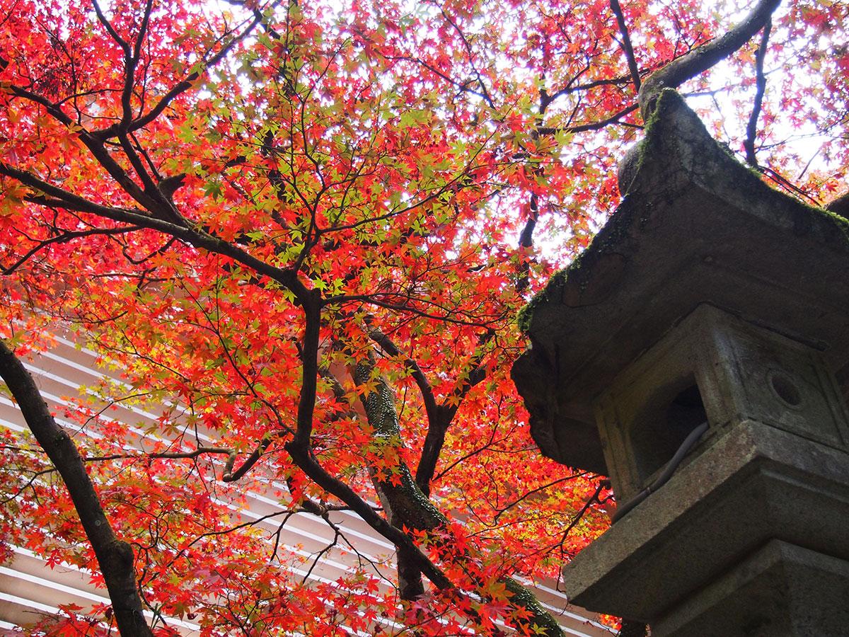 2017年11月19日『大雄山最乗寺』の紅葉が見頃です!