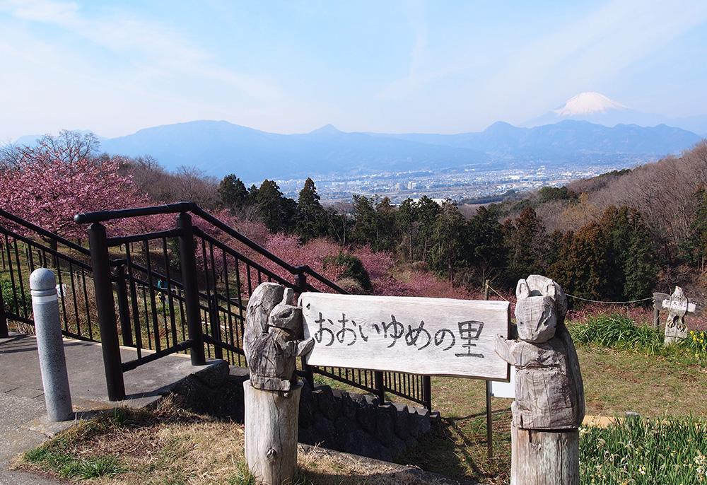 早咲き桜と富士山が美しい!おおいゆめの里「里山花まつり」に行ってきました!