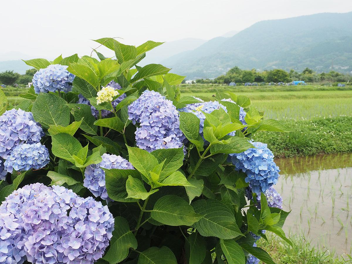 初夏の訪れを、色とりどりの花々でご紹介!