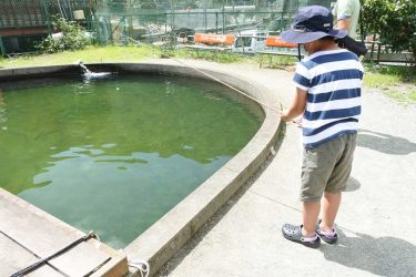 釣るも、食べるもよし! 親子で満喫「寄清流マス釣り場」
