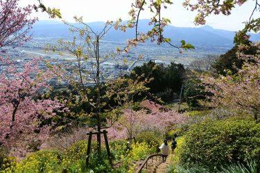 あしがらの絶景を見下ろす桃源郷!? 松田山の「アグリパーク嵯峨山苑」に行ってきました