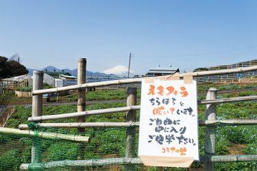 松田山の中腹で咲き始めのネモフィラと、のんびり埴輪に出合いました