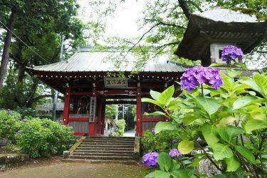大雄山最乗寺参道、アジサイと杉並木が美しい「天狗の小径」を歩きました