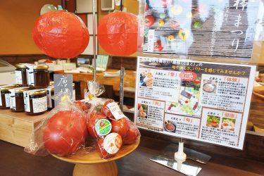 赤くて丸い夏野菜! 瀬戸屋敷で「唐柿まつり」開催中